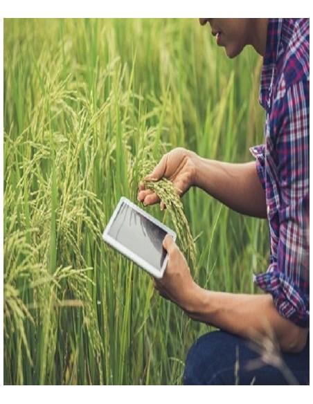 Investigação Agricola